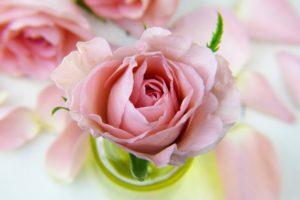 安らぎのバラの花